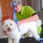 site internet a rosieres pour les toiletteurs pour chiens